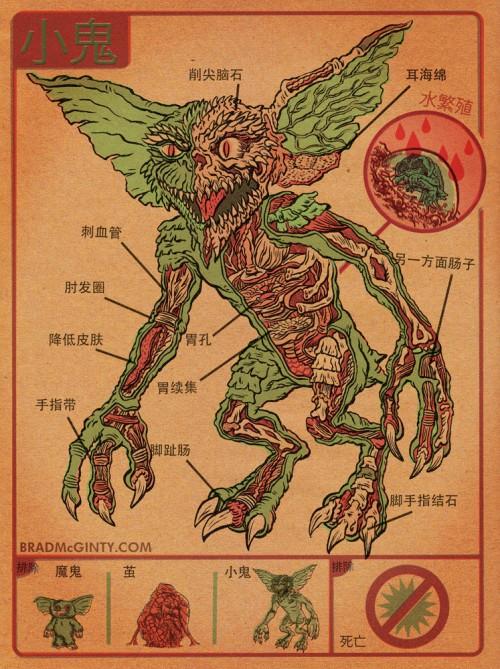anatomie gremlin